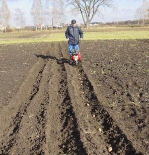 Посадка картофеля при помощи мотокультиватора