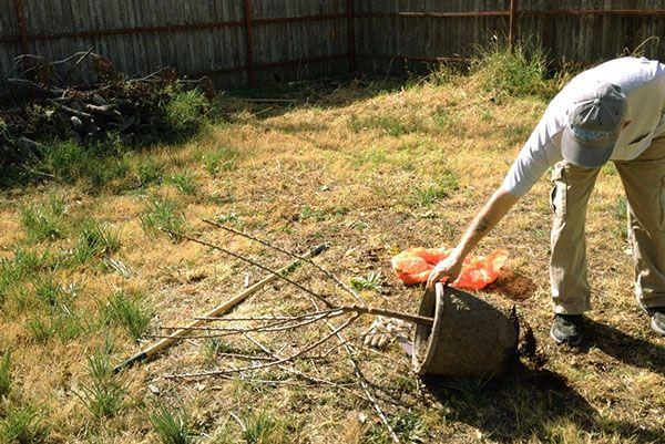 Высадка саженца с закрытой корневой системой