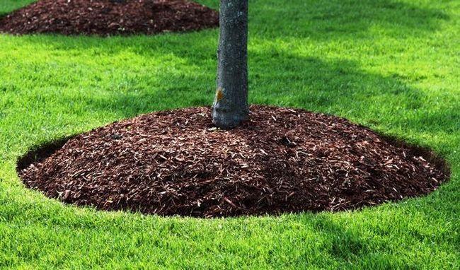 Посадка плодовых деревьев с последующим мульчированием