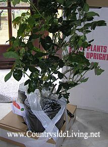Sadilni material vrtnice mail iz spletne trgovine