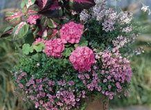Pravila za pripravo vrtne kompozicije v posodah