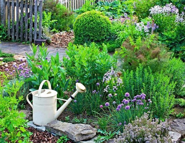 Zelišča v vašem vrtu: oblikovanje ideje, sajenje in nego