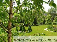 Projekt vertikalni načrtovanje posest - vertikalna postavitev na vašem vrtu