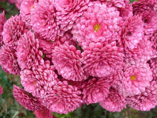 Razred-inovacije Lilly Pop vrt