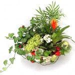 Растение в вашем доме