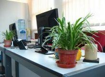 Растения на рабочем месте - инвестиция в здоровье персонала