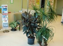 Растения, рекомендуемые для озеленения больниц