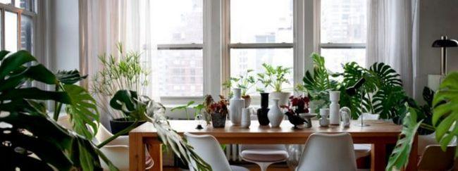 Растения в доме и дети