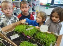 Растения в классе – залог успешной учебы