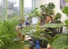 Растения в комнате - зима без вирусов!
