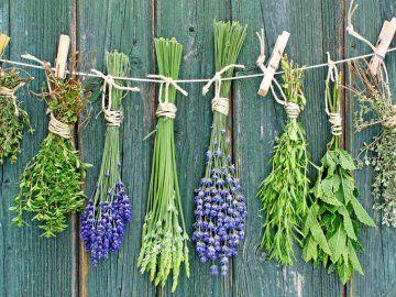 Skrivnosti ustreznih rastočih zelišč doma