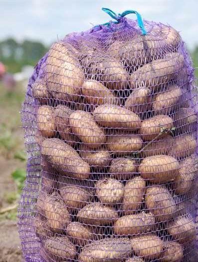 Semenski krompir Colette