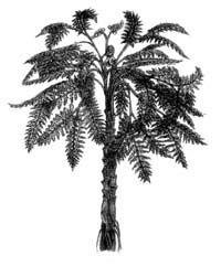 Seme praproti - izumrle rastline