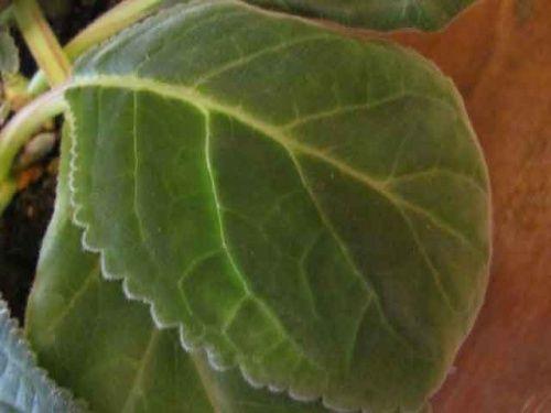 Щитовка на комнатных растениях и как бороться с ними