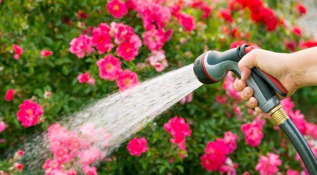 Шланги и насадки для полива