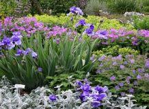 Симфония красок в саду