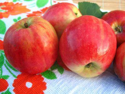 Вид яблони Горнист