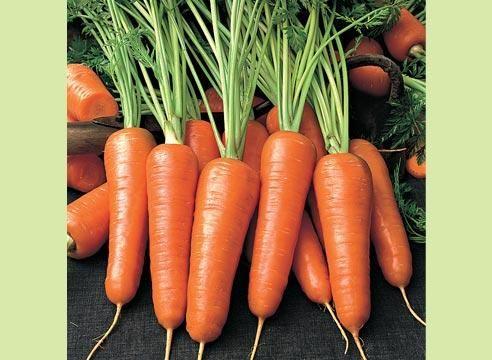 Морковь сорта Шансон