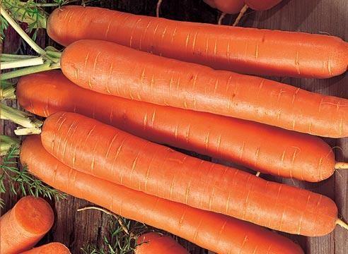 Морковь сорта Форто, Daucus