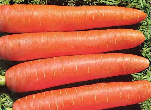 Морковь сорта Витаминная 6