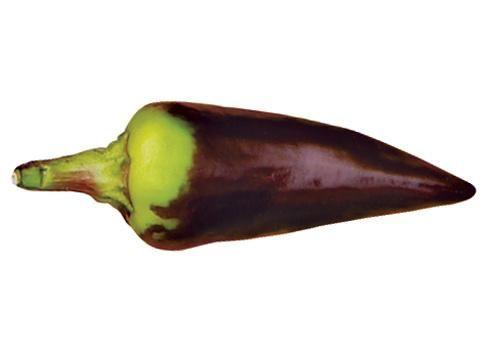 Pepper grm začinjena, ljuta