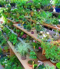 Imenik sobne rastline