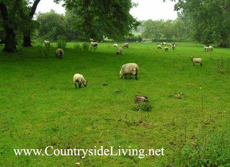 Landscape (Pokrajina) slog. Teren, ki mejijo na vrtu Hidcote Manor g Gloucestershire, Anglija (Hidcote Manor)