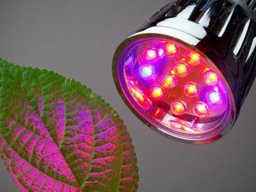 Светодиодный светильник для растений - преимущества, сборка и установка