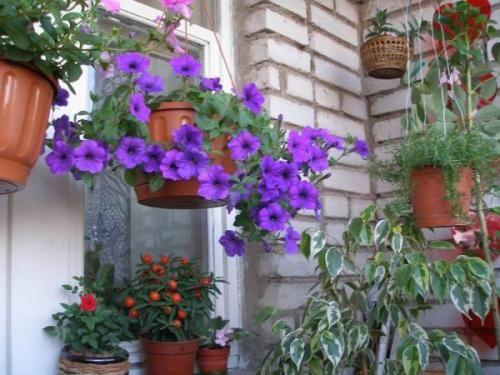 Свежий воздух для цветов - жизненная сила растения