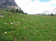 Tibetanski travišča pospešitev globalnega segrevanja
