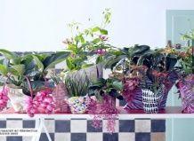 Тропические растения задают этому лету ритм латино