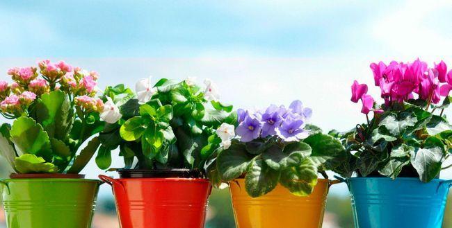 Gnojila za sobne rastline doma