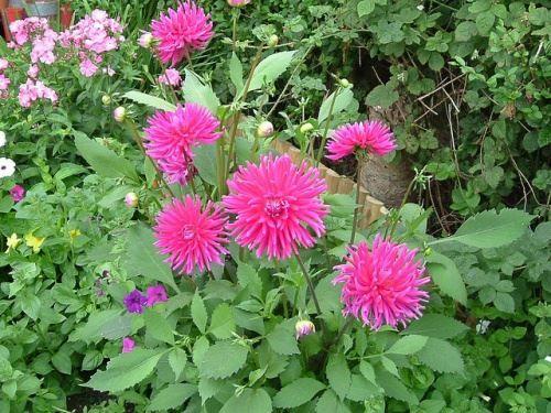 Květina péče v září