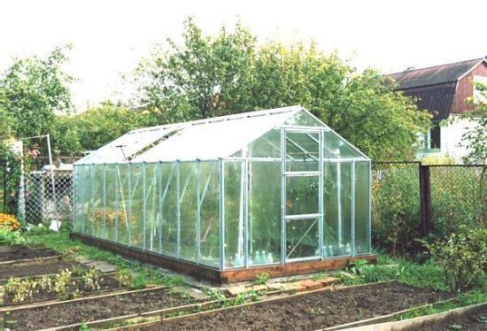 paradižniki v rastlinjaku