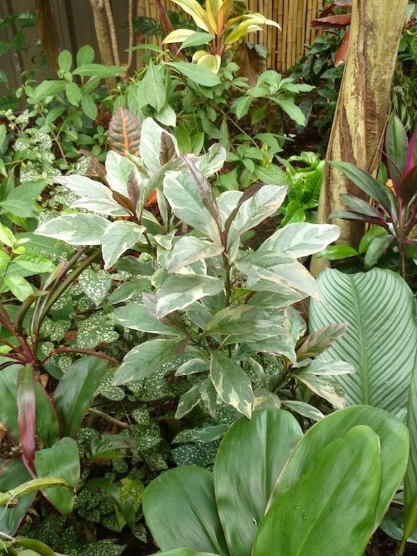 Edinstven vrt v tropskem slogu