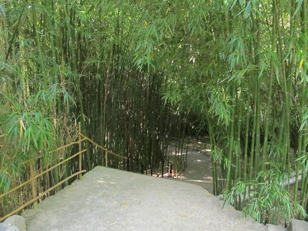 Bambusa Grove morja park