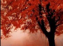 V kakšne barve barve jesenski vrt?