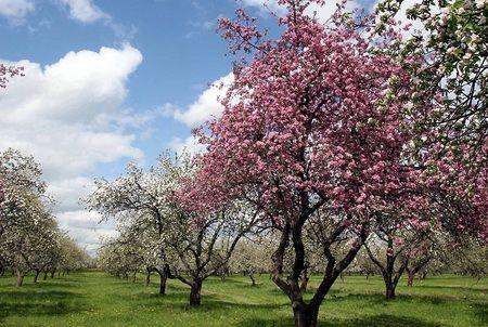 Pomlad vrt