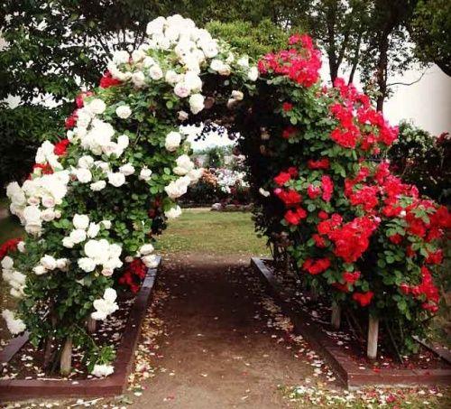 Виды опор, используемые в дизайне сада
