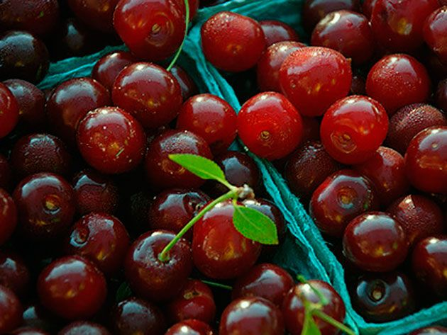 Дерево вишня – посадка и уход, фото вишни, обрезка вишни и прививка, описание сортов вишни, болезни и вредители