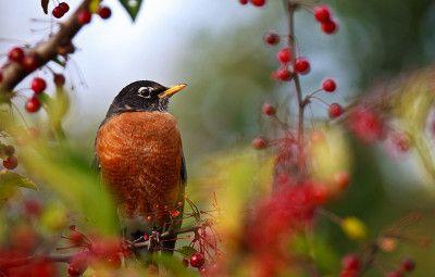 Птицы-вредители