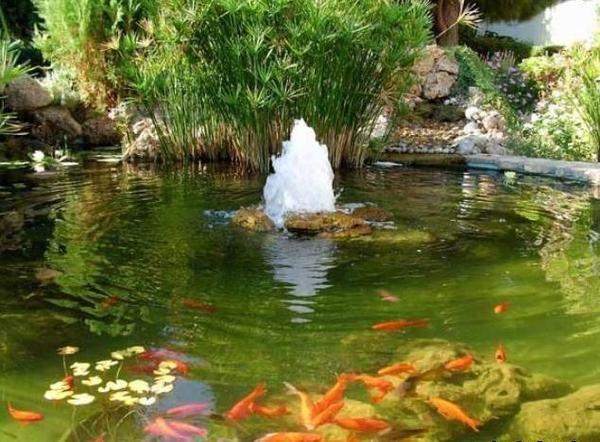 Ribnjak sa fontanom i ribe