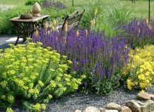 Волшебная рапсодия многолетних цветников