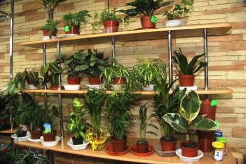 Фото лекарственные растения