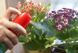 Вредители комнатных растений: борьба с первых дней