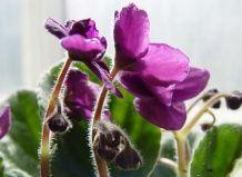 Škůdci pokojových rostlin a květin