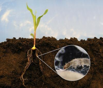 вредители от стайни растения в почвата