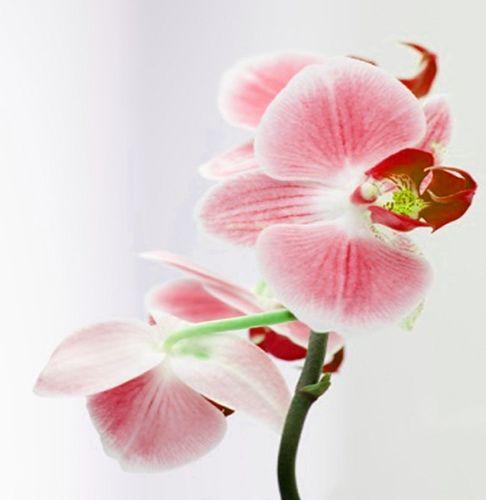 Izbira poročne šopek orhidej