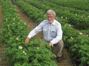 gojenje krompirja na mitlayderu
