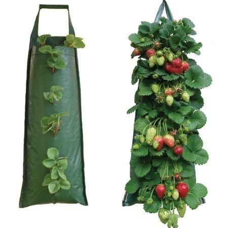 Gojenje jagod v vrečah - donosen posel